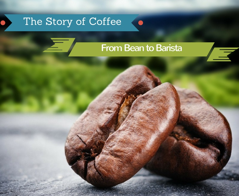 The Story of Coffee: From Bean to Barista