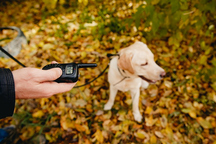 Best-Bark-Collars-With-Remote