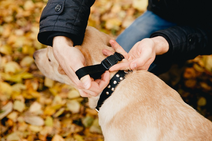 Things-to-Look-For-When-Buying-Dog-Training-Collar