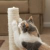 The Best Cat Scratching Posts