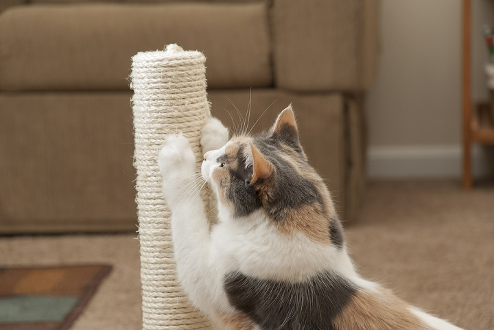Best-Cat-Scratching-Post