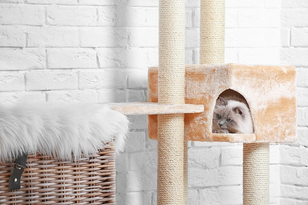 Tips-for-Choosing-the-Best-Cat-Tree-for-Large-Cats