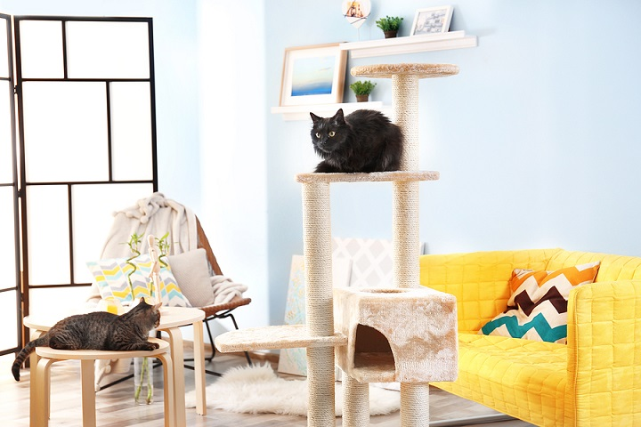 best-cat-trees-for-large-cat