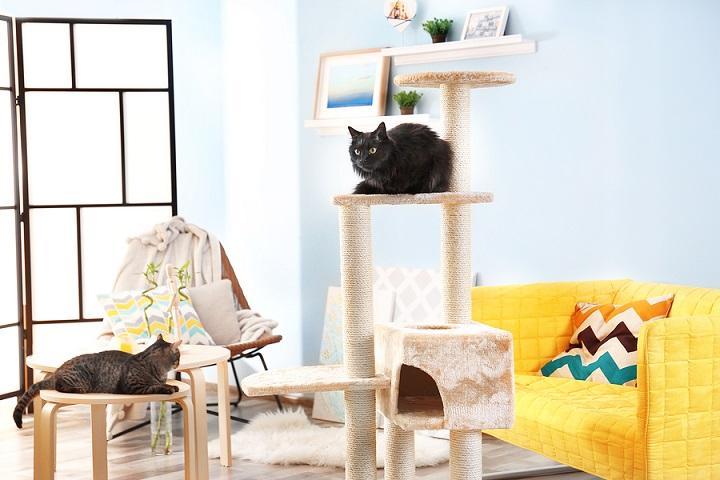 best-cat-trees-for-large-cat