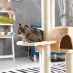 Best-Cat-Trees-for-Small-Apartments