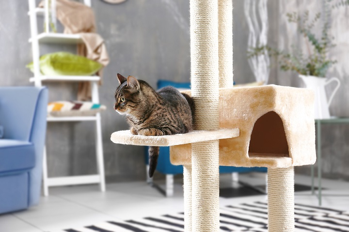 Best-Cat-Tree-for-Small-Apartments