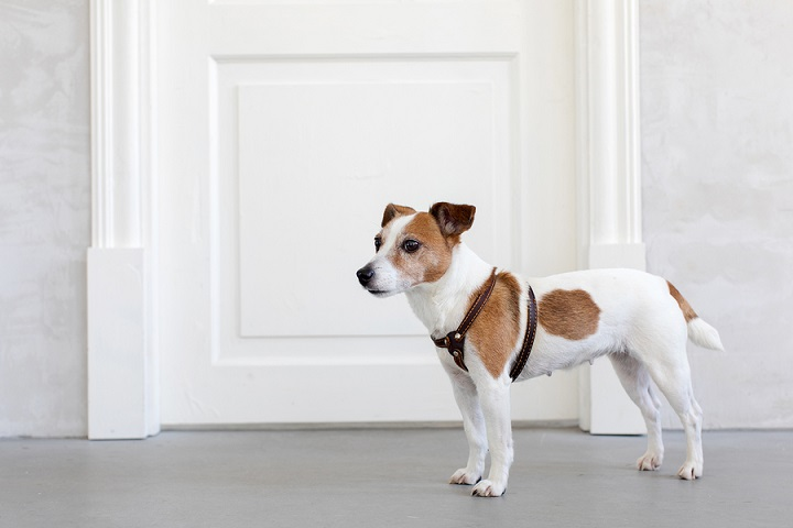 Best-Dog-Harnesses-for-Small-Dogs
