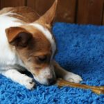 5 of the Best Rugs for Dogs [A Top 5 Review]