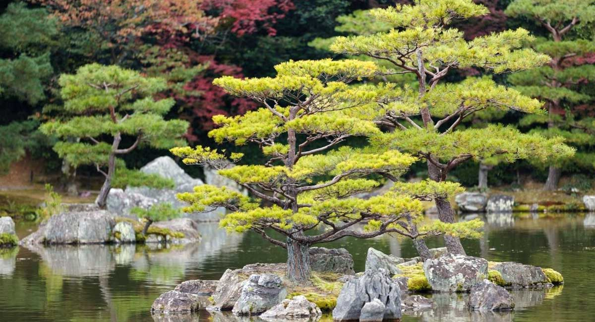 Get Your Fancy On with Ornamental Miniature Trees